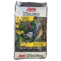 Lyric 2647281 Sunflower Seed