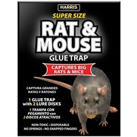 TRAP GLUE RAT 1PK 8.5 X 13.5IN