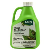 SOAP INSECT KILLER CONCNT 16OZ