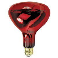 Feit 250R40/10 Incandescent Lamp