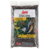 Lyric 2647419 Sunflower Seed