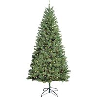 TREE DOUGLAS 7FT MULTI CUL